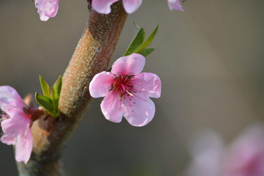 Поръчайте лесно и бързо цветя за празника
