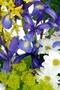 http://flowersinsofia.com/en/ ириси, хризантеми, форзиция