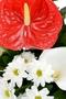 http://flowersinsofia.com/en/ антуриум, хризантеми